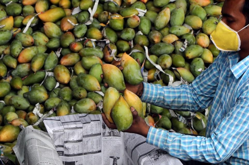 Un frutero prepara mangos para su venta en un mercado de la ciudad india de Jammu. EFE/EPA/JAIPAL SINGH
